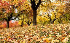 Autumn in Hunza, Pakistan.