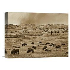 Global Gallery American Bison Herd Grazing on Shortgrass Prairie Theodore Roosevelt National Park North Dakota Wall Art - GCS-395916-1216-142