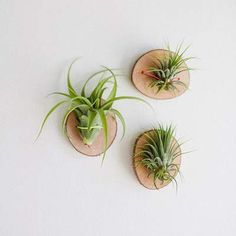living wall art, air plants are super easy to take care of. No soil required! Just sun and some water living wall art, air plants are super easy to take care of. No soil required! Just sun and some water Plant Wall, Plant Decor, Hanging Plants, Indoor Plants, Faux Plants, Indoor Garden, Air Plant Display, Display Wall, Deco Nature