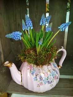 Grape hyacinth in a vintage pink tea pot