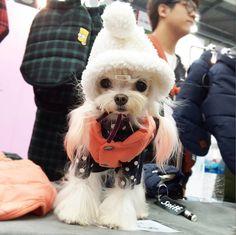 """"""". . 쪼꼬미 스머프 한명? 한마리?  . . #몽실 #멍스타그램 #펫스타그램 #독스타그램 #말티즈 #말티 #dog #말티즈그램 #dog #dogstagram #maltese #mongsil #pet ."""""""