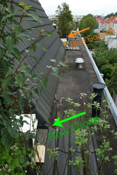 Our two bee hives on our roofgarden.