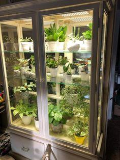 Indoor Greenhouse, Small Greenhouse, Indoor Garden, Indoor Plants, Outdoor Gardens, Home And Garden, Room With Plants, House Plants Decor, Plant Decor