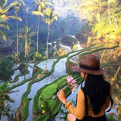 Morning view from Tegalalang Rice Field, Gianyar Bali
