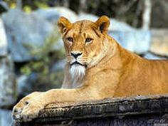 how to preserve endanger animals Protecting endangered species is important in maintaining biodiversity on our beautiful planet there is a wide range of organizations, nature reserves, and zoos that work in keeping endangered animals from going extinct.