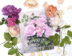 Vintage Roses, photography by Georgianna Lane Roses David Austin, Roses Book, Gardening Books, Rose Cottage, Image Types, Vintage Roses, Classic Beauty, Beautiful Roses, Vintage Images