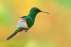Hummingbird by Stefan Cruysberghs on 500px