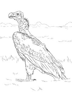 Lappet Faced Vulture Coloring Page From Vultures Category. Select From  28488 Printable Crafts Of Cartoons, Nature, Animals, Bible And Many More.