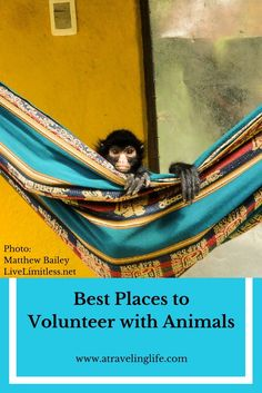 Best Places to Volunteer with Animals around the World
