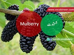 Learn English vocabulary in Urdu. English through Urdu made easy. Easiest way to learn English vocabulary in Urdu. English to Urdu Vocabulary. English Speaking Practice, English Language Learning, Learn English Words, Gre Vocabulary, English Vocabulary Words, Fruits Name With Picture, English Conversation Learning, Fruit Names, E Words