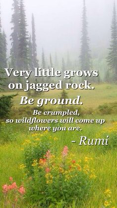 Rumi...It is okay to fall. Just don't be afraid to bloom where you are planted! Left click on photo to enlarge.