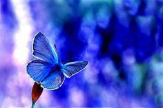 psicadelic butterfly...!!!