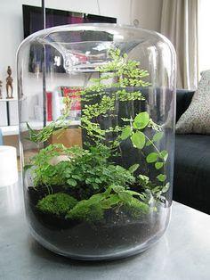 moss and fern terrarium, not closed