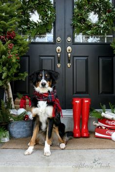 5 Pro Tips for Including Pups in Your Holiday Card