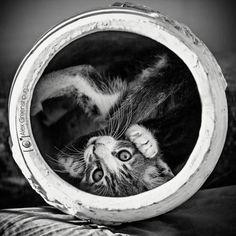 La vie secrète et mystérieuse des chats, capturée en photographies noir et blanc