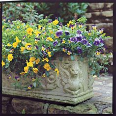 Multicolored Violas - Spectacular Container Gardening Ideas - Adding a bicolored viola to this planter ties together the two solid-colored varieties. Tiny Garden Ideas, Home And Garden, Spring Garden, Winter Garden, Container Plants, Container Gardening, Flower Containers, Plant Containers, Fall Containers