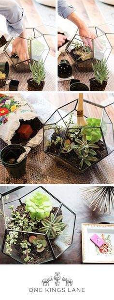 Check out One Kings Lane's foolproof (and oh-so-chic) DIY terrariums kits. No green thumb required!