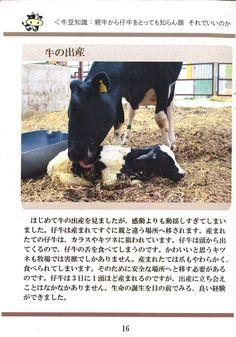 16ページ:牛の出産