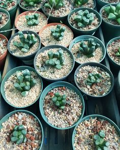 A look at some of my succulents... #gardening #garden #gardens #DIY #landscaping #home #horticulture #flowers #gardenchat #roses #nature