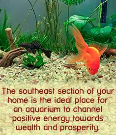 to Place a Feng Shui Aquarium in Your House? Feng Shui tip on aquarium placement in your houseFeng Shui tip on aquarium placement in your house