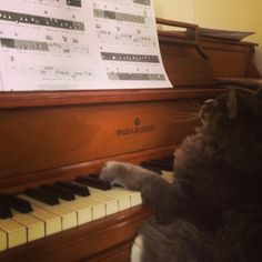 Paws practicing His piano lessons