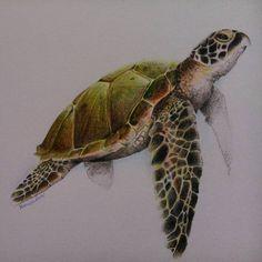 Sea turtle paintings sea turtle by awishdiani on deviantart ocean turtle, s Ocean Turtle, Sea Turtle Art, Turtle Love, Sea Turtle Tattoos, Animal Sketches, Animal Drawings, Cute Turtles, Sea Turtles, Baby Turtles