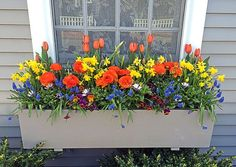 In this window box there are tulips, daffodils, ranunculus (the orange, rose-like flowers), grape hyacinths (blue), pansies (purple and gold...