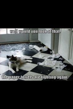 Animal humor