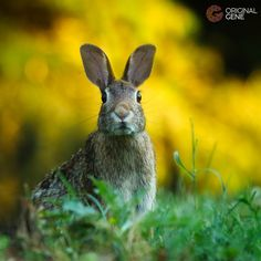 Beautiful rabbit of hope to inspire you on your phone. Home Dna Test, Dna Facts, Wallpaper Bible, Beautiful Rabbit, Digital Wall, Holiday Time, Happy Easter, Beautiful Pictures, How To Memorize Things
