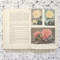 vintage rose illustrations