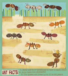 Ants Canvas Reproduction for a little outdoor explorer :)