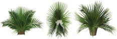 wedding church ceremony decoration with palm leaves - Google Search