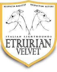 Etrurian Velvet - Allevamento del Piccolo Levriero Italiano