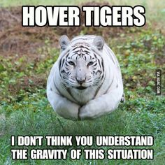 Hover Tiger...