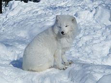 La tundra (del ruso тундра, que significa 'llanura sin árboles', y este de tūndâr, palabra lapona que significa 'tierra infértil') describe ...