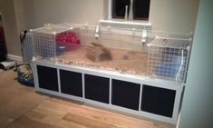 Proudly presenting my C cage- pic heavy - The Guinea Pig Forum