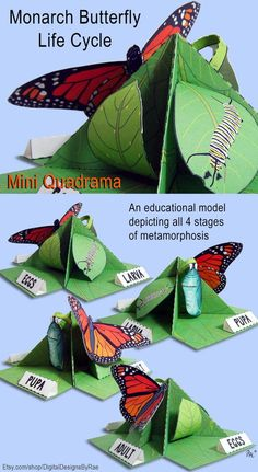 This is a Monarch Butterfly Life Cycle Mini Quadrama educational paper toy model that you print and assemble yourself. This model includes factual information about the Monarch Butterfly and its amazing metamorphosis. The mini quadrama acts as a unique vi Butterfly Project, Butterfly Crafts, Monarch Butterfly, Butterfly Design, Class Projects, Science Projects, School Projects, Science Activities, Science Experiments