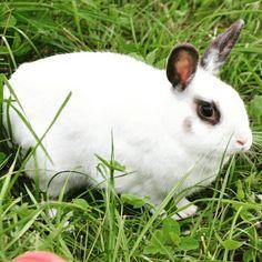 Adoptable couple: Ginger and Fred #Hase #Kaninchen #dontshopadopt #bunnystagram #兔子 #králík #kanin #krolik #lapin #κουνέλι #conejo #ウサギ #兎 #うさぎ #토끼 #królik #doadopcji #rabbit #rabbits #bunny #bunnies #rescue