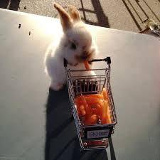 słodki króliczek kupił sobie marchewki.
