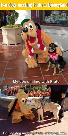 Two dogs meeting Pluto at Disneyland.
