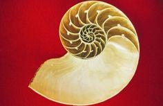 Fibonacci y la proporción áurea en Lateralus de Tool - BENALMADELMAN