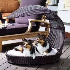Perfect for my spoiled dog..fancy apt balcony furniture