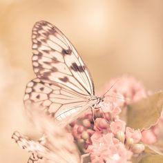 Wings I by ~BeautyByLinnea on deviantART