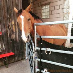 Ein Pferd ist teuer. Hier erfahren Sie was es etwa kostet, ein Pferd in einen Pensionsstall zu stellen oder in Eigenregie zu halten.