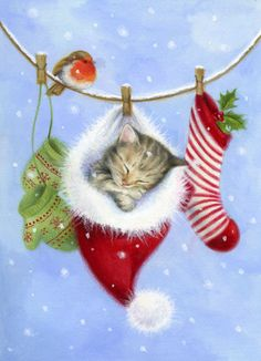 Lisa Alderson - LA - christmas kitten.jpg                                                                                                                                                                                 Plus
