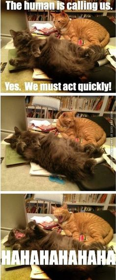 Act quickly. More fun cats at www.funcatpictures.com