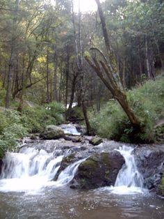 Queretaro, Sierra Gorda Forest