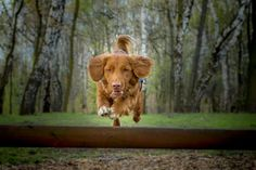 in action... - flying dog...