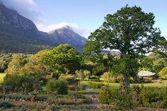 Kirstenbosch Gardens, Cape Town, South Africa.... Garden Photos, Zimbabwe, Cape Town, Botanical Gardens, South Africa, Followers, Boards, African, Explore
