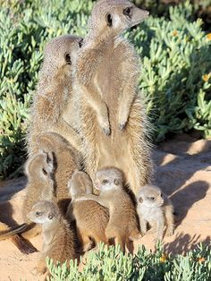 Oudtshoorn - Travel the Klein Karoo & Route South Africa. African Animals, African Safari, Most Beautiful Animals, Beautiful Creatures, Baby Animals, Cute Animals, Animals Of The World, Pet Birds, Animal Kingdom